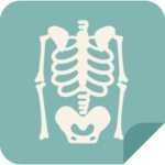 Human skeleton - icon