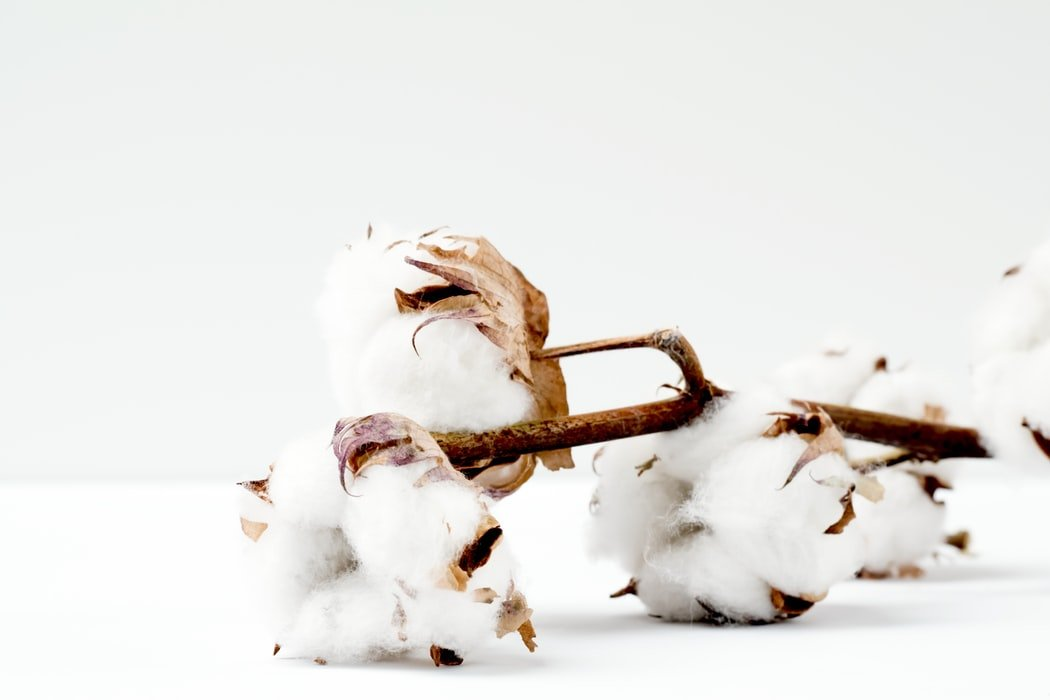 Cotton cultivation is laced with controversies.
