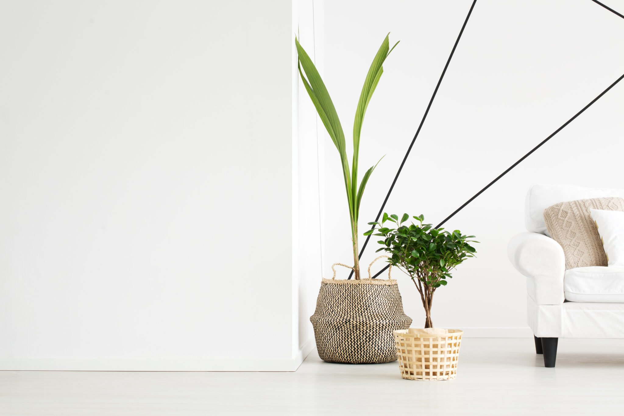 Plants are a great option for making the air feel fresh and alive.